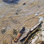 Debris on Lake Michigan shoreline